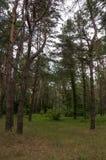 Tief im grünen Sommerwald stockfoto