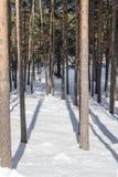 Tief im Holz stockfotos