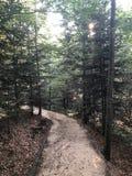 Tief im Wald lizenzfreies stockbild