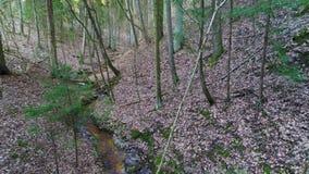 Tief im Wald am Abend stock footage
