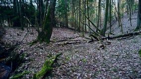 Tief im Wald am Abend stock video footage