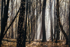 Tief im Wald in den Bergen Lizenzfreie Stockfotografie