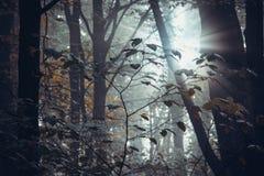 Tief im Wald in den Bergen Lizenzfreies Stockfoto