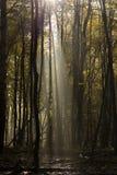 Tief im Wald in den Bergen Stockfoto