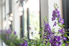 Tiefe der Acker-Stiefmütterchen-Blume mit unscharfer warmer Glühlampe Lizenzfreie Stockfotografie