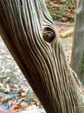 Tiefe Nuten auf verwittertem totem Baumstamm lizenzfreie stockbilder