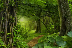 Tiefe tropische Dschungel Lizenzfreie Stockfotos