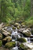 Tiefe Waldflußlandschaft Stockfoto