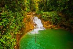 Tiefe Waldwasserfall Nationalparkinsel von Bohol philippinen stockfotos