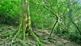 Tiefen des Waldes Stockbild