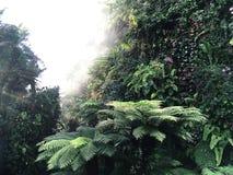Tiefer Abstieg im nebeligen tropischen Regenwald Stockbilder