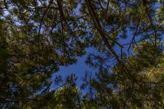 Tiefer blauer Himmel durch Treetops Lizenzfreie Stockbilder