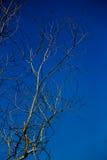 Tiefer blauer Himmel und toter Baum stockfotos