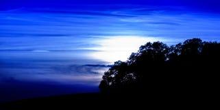 Tiefer blauer Sonnenuntergang über Bäumen Stockfotografie