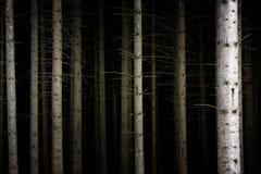 Tiefer dunkler Wald Stockfotos