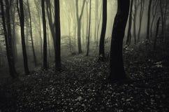 Tiefer dunkler Wald mit mysteriösem Nebel lizenzfreies stockbild
