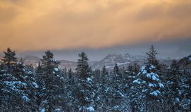 Tiefer frischer Schnee in den norwegischer Waldnördlichen Landschaften im Winter lizenzfreie stockfotos
