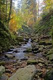 Tiefer Herbstwald Lizenzfreie Stockfotografie