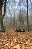 Tiefer nebelhafter Wald Stockfotografie