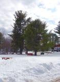 Tiefer Schnee und hohe Evergreens Stockfoto