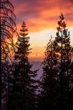 Tiefer Sonnenuntergang des reichen Rotes durch den Wald Stockbild