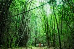Tiefer Wald der Bambuswaldung Lizenzfreies Stockbild