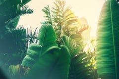 Tiefes dunkelgrünes Palmblattmuster mit Leuchtorangesonnen-Aufflackerneffekt stockbilder