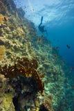 Tiefes Koralleriff mit blauem Wasser u. Taucher lizenzfreies stockfoto