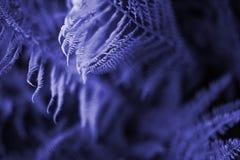 Tiefviolette Farnblätter Blumenfarnhintergrund stockfotografie