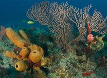 Tiefwasserseegebläse Stockbild