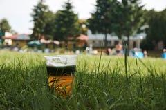 Tiegel Bier stehend im Gras durch das Pool mit verwischt lizenzfreie stockfotografie
