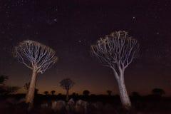 Tiemble el bosque del árbol en Namibia meridional tomada en enero de 2018 foto de archivo libre de regalías
