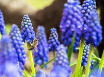 Tiempo, abeja y flores de primavera imagen de archivo libre de regalías