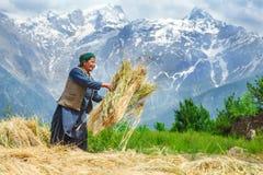 Tiempo agrícola imagen de archivo