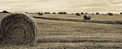 Tiempo de cosecha Foto de archivo