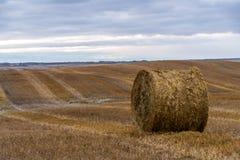 Tiempo de cosecha canadiense de la acción de gracias Hay Bale Imágenes de archivo libres de regalías