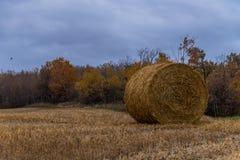 Tiempo de cosecha canadiense de la acción de gracias Hay Bale Foto de archivo