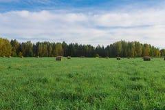 Tiempo de cosecha del trigo Fotografía de archivo