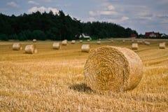 Tiempo de cosecha del trigo Fotos de archivo libres de regalías