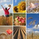 Tiempo de cosecha feliz, collage otoñal Imagen de archivo