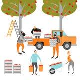Tiempo de cosecha La gente feliz está escogiendo manzanas en el jardín Los personajes de dibujos animados divertidos están trabaj Fotografía de archivo libre de regalías