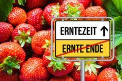 Tiempo de cosecha para las fresas Fuer Erdbeeren de Erntezeit Imagenes de archivo