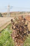 Tiempo de cosecha - vid seca fotografía de archivo