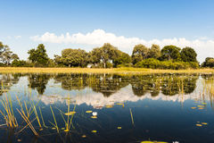 Tiempo de la inundación en el delta de Okavango Fotos de archivo