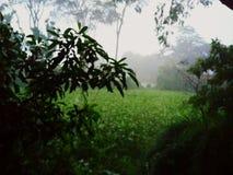 Tiempo de la lluvia Imagenes de archivo