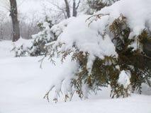 Tiempo de la nieve Imagen de archivo libre de regalías