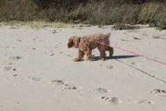 Tiempo de la playa con el perro de perrito Foto de archivo libre de regalías