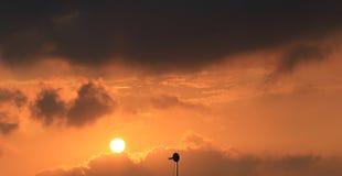Tiempo de la puesta del sol Imagenes de archivo