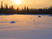 Tiempo de la tarde en bosque del invierno Imágenes de archivo libres de regalías