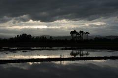 Tiempo de la tarde en el campo del arroz en Tailandia Fotos de archivo